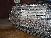 I have neglected my car...-bugs-004-jpg