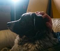 Show us your pet.-psx_20200730_221157-jpg